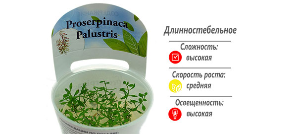 Proserpinaca