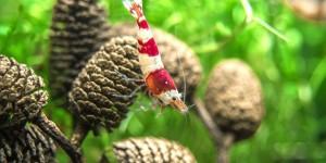 Фитотерапия в аквариуме